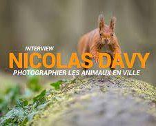 photographier les animaux en ville.jpg