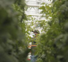 Au Québec, l'agriculture urbaine est dopée par la pandémie.jpg